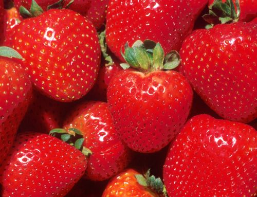Newsletter – Pick Strawberries Day